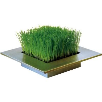 decoratief gras in zinken bak leuke planten. Black Bedroom Furniture Sets. Home Design Ideas